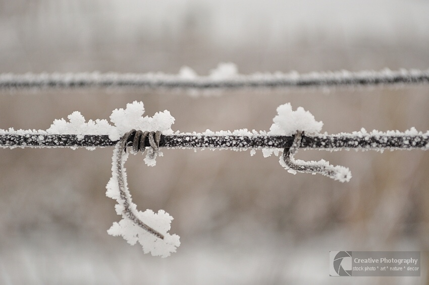 Snowy vine crook on wire