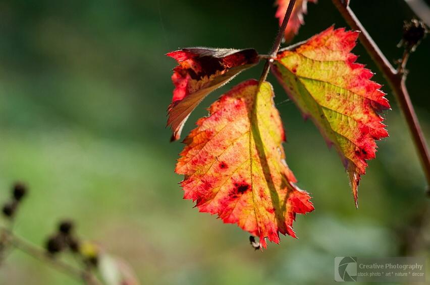colorful autumn leaf