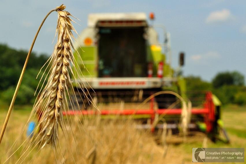 Combine harvester in the summer