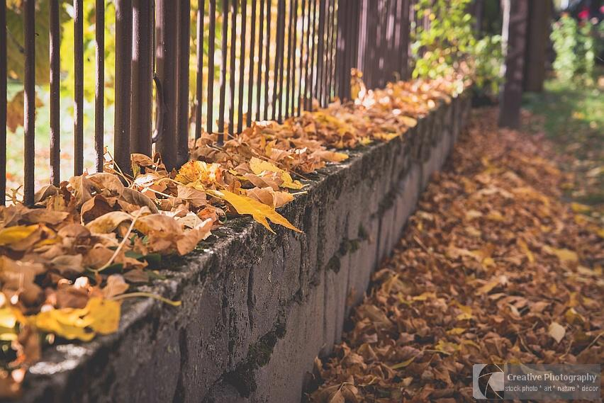 Fallen leaves on the fence in autumn