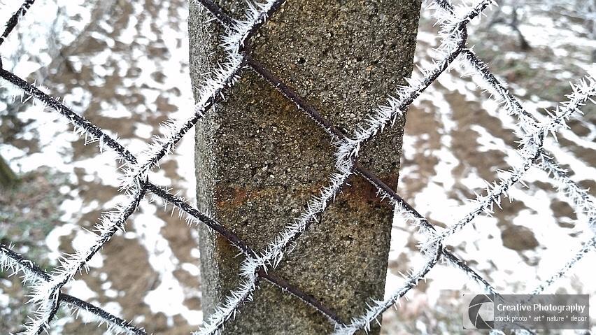 Frosty fence in winter