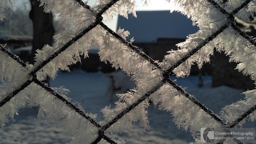 Frosty fence in the winter