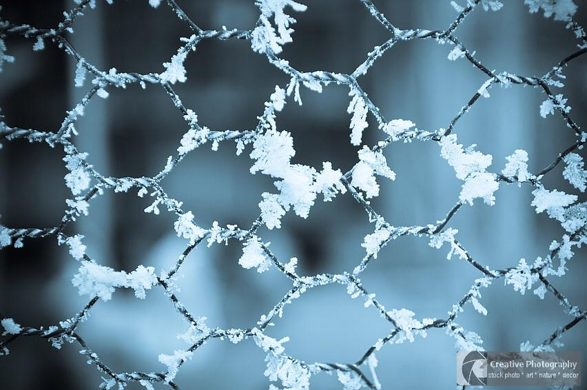 Frosty fence in the winter with blue tone