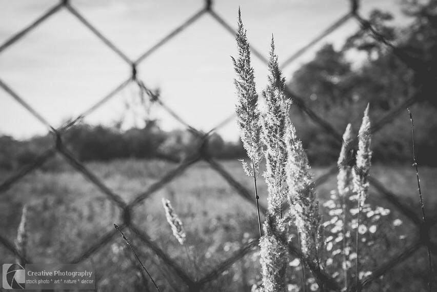 plants through fence