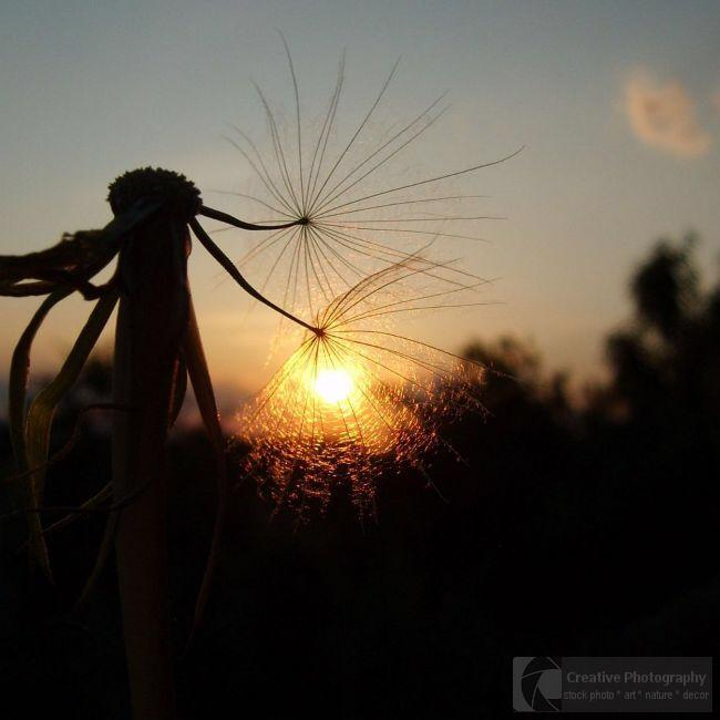 Sunset with plant