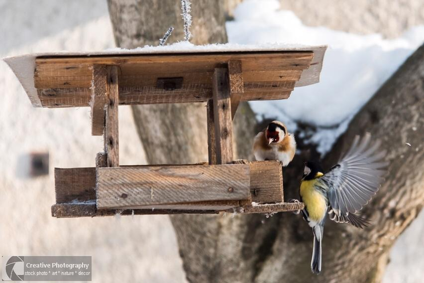 titmouse bird and goldfinch in the bird feeder in winter