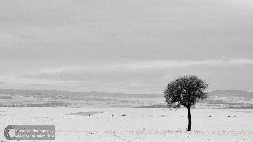 Tree alone on the snowy landscape. Black and white photo