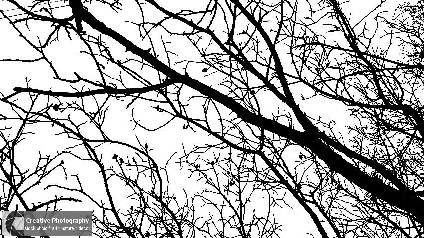 tree minimal, black and white photo
