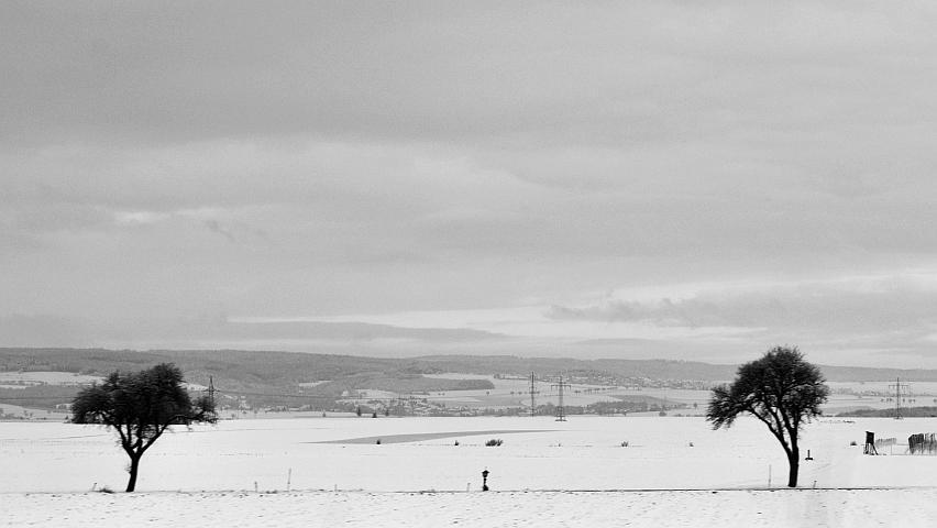 Two trees in a snowy landscape in winter