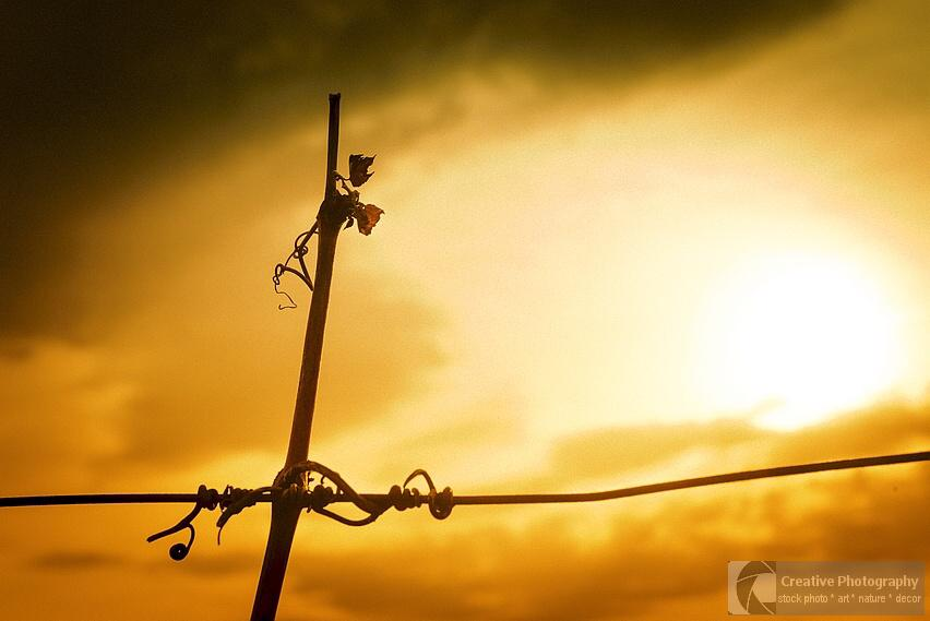 vine crook on wire