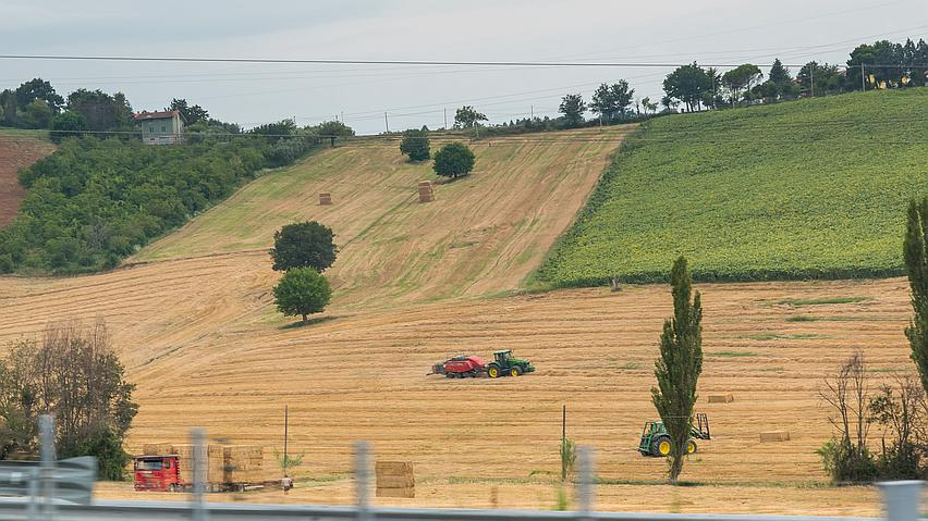 Work after harvesting in Italy