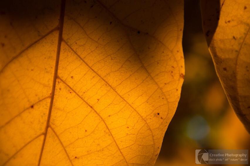 Yellow autumn leaf macro